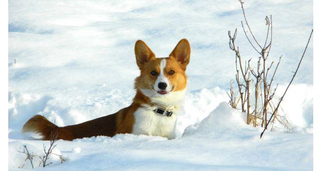Vali tali jätkub: millist lisaturgutust vajavad koer ja kass külmal ajal?