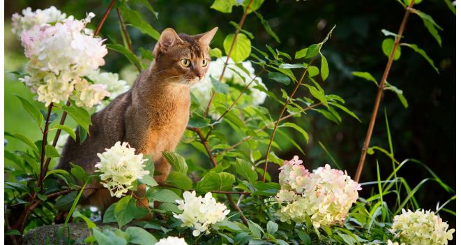 Kemikaalivaba puugitõrje lemmikloomale? Ekspertide sõnul on lahendused olemas.