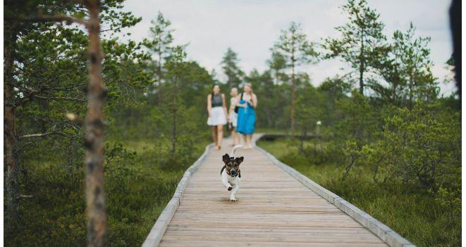 Kuidas oma lemmikloomal ära tunda puukinfektsiooni sümptomeid?