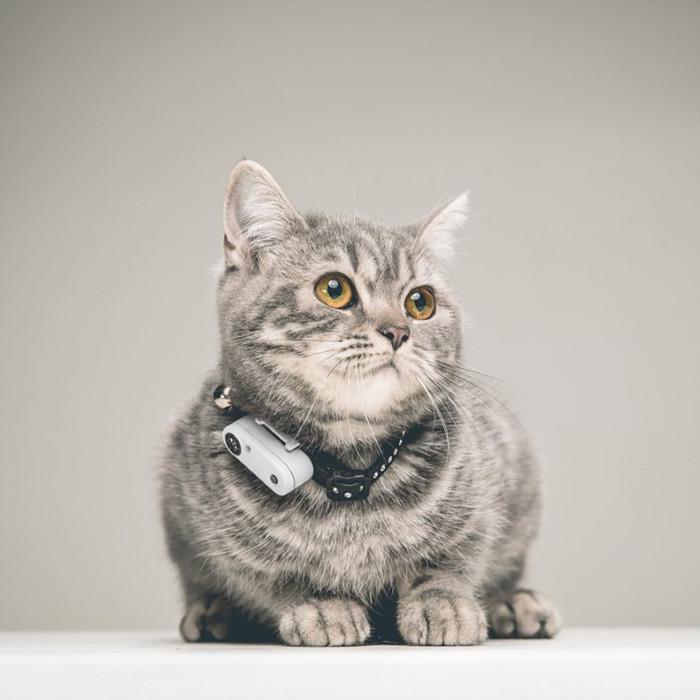 TICKLESS TickLess CAT ultraheliripats puukide ja kirbude tõrjumiseks, koertele ja kassidele