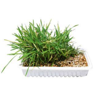 TRIXIE Натуральная трава для кошек 100 г