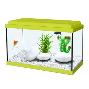 ZOLUX Akvaarium Aqua Nanolife kidz roheline, 8 l