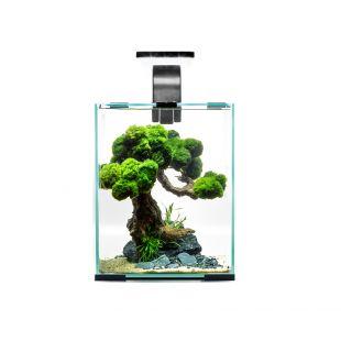 AQUAEL Day & Night krevettide akvaariumi komplekt must, 20 x 20 x 25 cm, 10 l