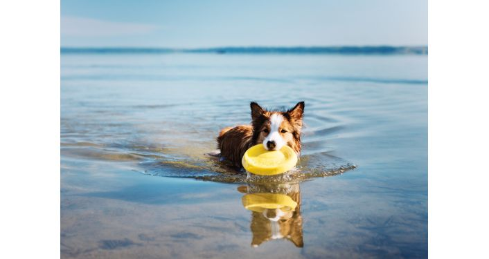 Mida meeles pidada enne koeraga suplema minemist?