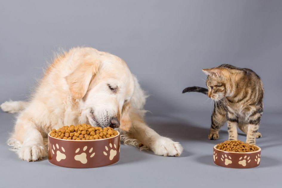 """Lemmikloomatoit – kas tõesti """"mida kallim, seda parem""""?"""